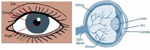 Eye Health Online Course - Module 1: Eye Anatomy